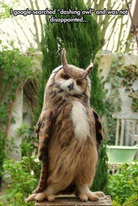 1dashing owl_n